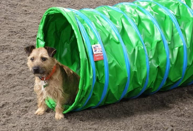Naylor Agility Dog Tunnel